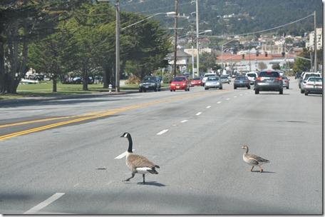 Monterey, Ca 018