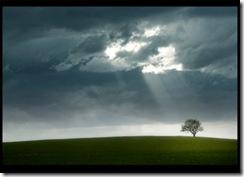 tormenta_sol_arbol