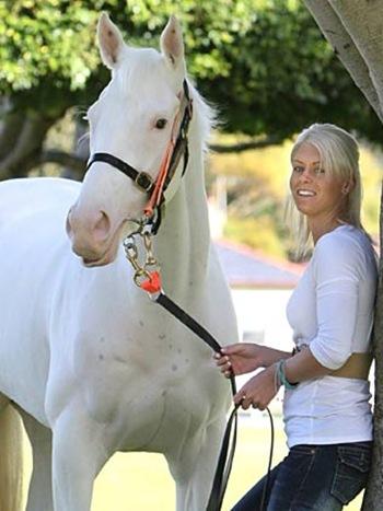 572278-white-horse