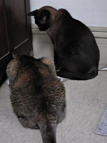 cats240111 (Medium)