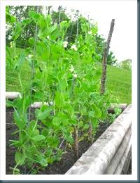 june 24 garden WEB-16
