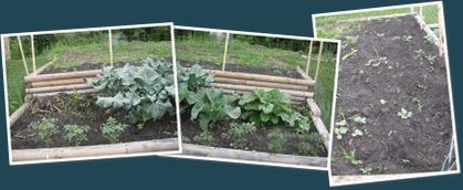 View my garden 3