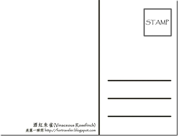 7月  酒紅朱雀(反面)