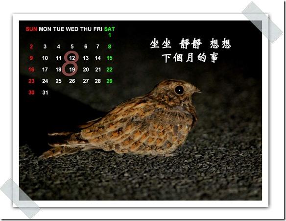 8月  夜鷹(攝於  花蓮壽豐)