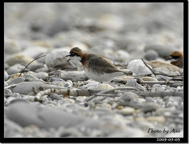 蒙古行(2009-05-03美崙溪口)9675