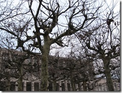 copaci coafati, Bruxelles