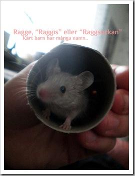 raggis