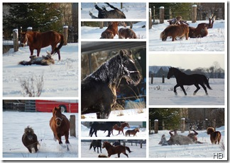 Die Pferde im Neuschnee © H. Brune