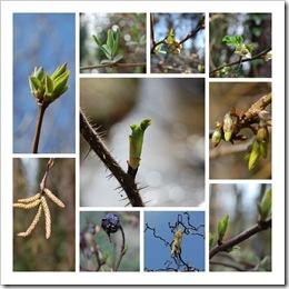 Collage Frühlingsblätter © H. Brune