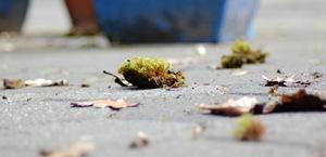 Mosswürfe vom Dach © H. Brune