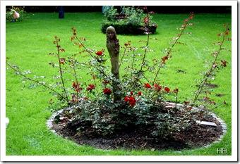 Rosenbeet © H. Brune