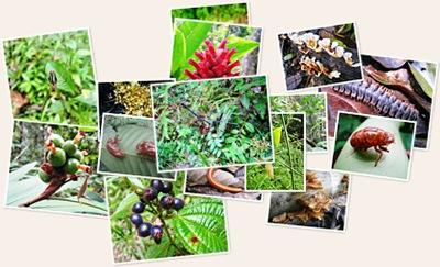 View Flora & Fauna