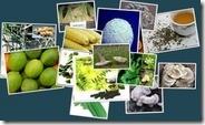 DXN-MyCo-Veggie-Ingredients