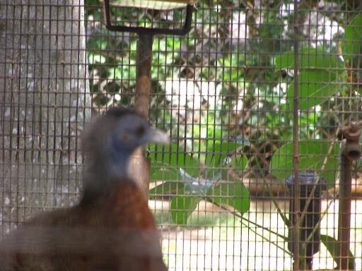 pheasant art glass bevel