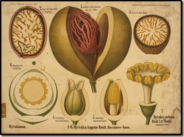vintageprintable.comEducational-plate-avocado