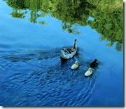 Lago di Prespa (3)