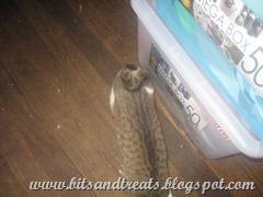 ponchi's tail