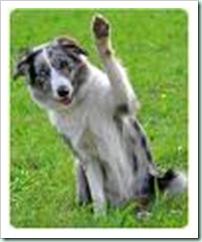 waving dog