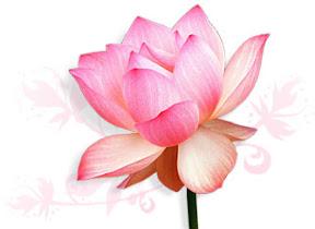 http://lh6.ggpht.com/_CK9F0ohAraA/S4HqqZPH8kI/AAAAAAAAAzY/BJ2gSaUTHkQ/s288/lotus.jpg