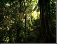 selva lacandona1