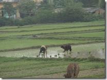 農家の風景①