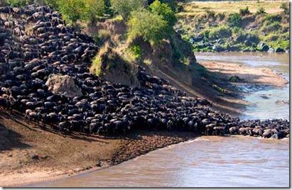 Serengeti - göç 1