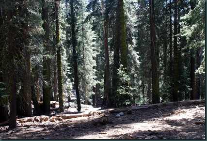 Sequoia National Park 141