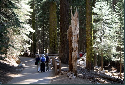 Sequoia National Park 147