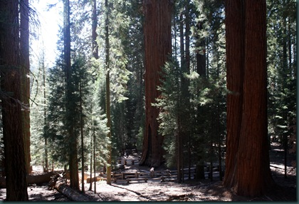 Sequoia National Park 149