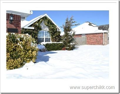 Snow, Feb 2011