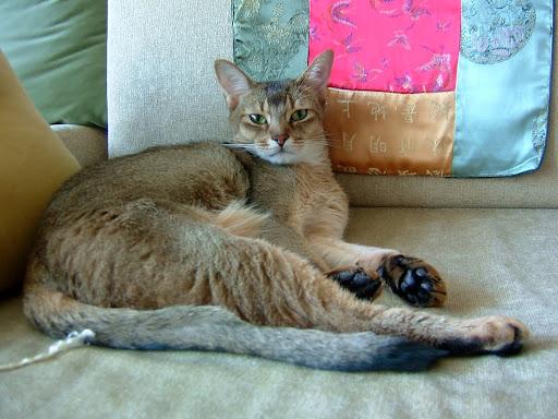여유로운 고양이 바토 [고양이,고양이키우기,고양이집사,반려묘,cat]