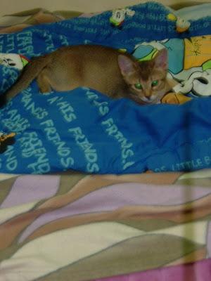 점프하는 고양이 바토 [고양이,고양이키우기,고양이집사,반려묘,cat]