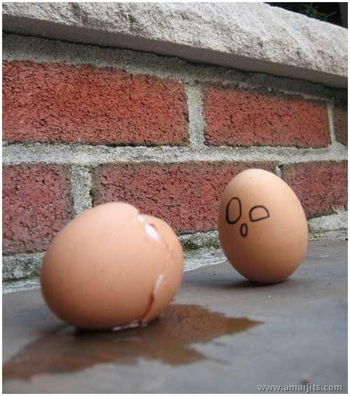 Eggs-amarjits (19)