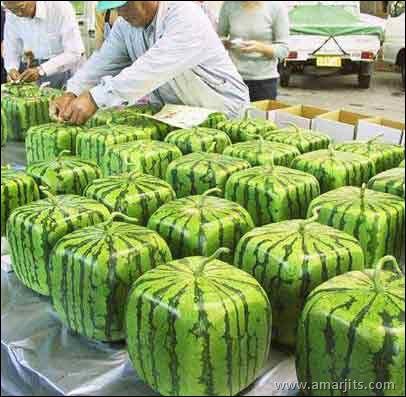 watermelonfun30je2