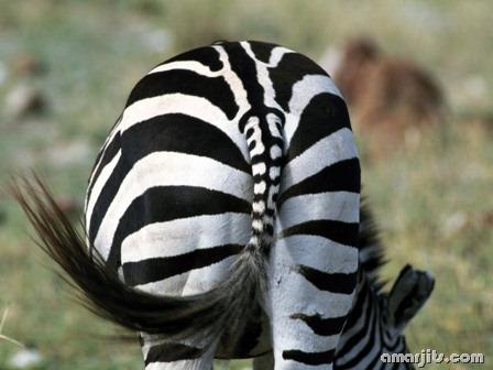 amarjits-com-Animal-Pics (29)