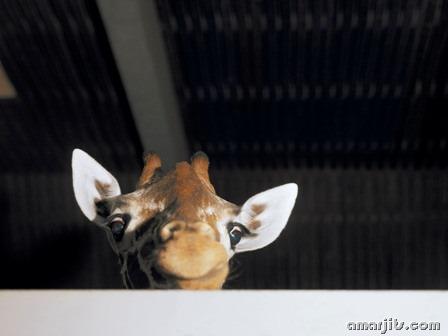 amarjits-com-Animal-Pics (7)
