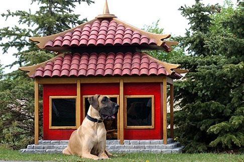 Dog-House-amarjits (25)