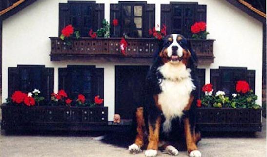Dog-House-amarjits (14)
