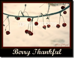Berry Thankful CP