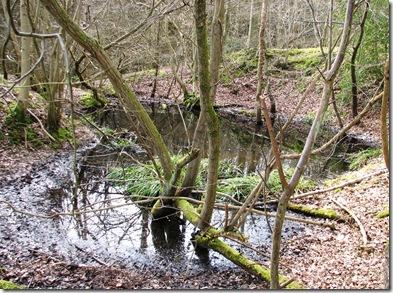 20100317 Pond in Footlands Wood 017