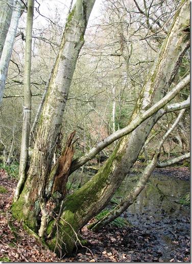 20100317 Wild service Footlands Wood 015