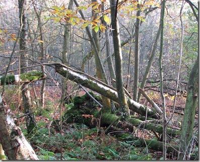 20081027 Wbx & Brede High Wood 023