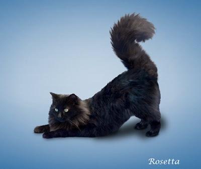 [yoga-cats-2[7].jpg]