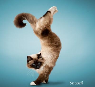 [yoga-cats-4[9].jpg]