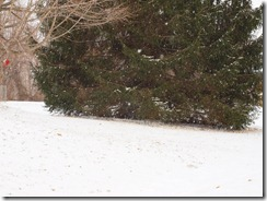 snow days 001