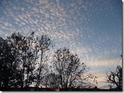 White on white and mackerel skies 008