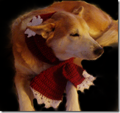daisy red scarf w snowflake