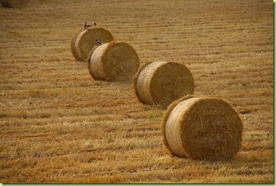 palha de trigo na dinamarca