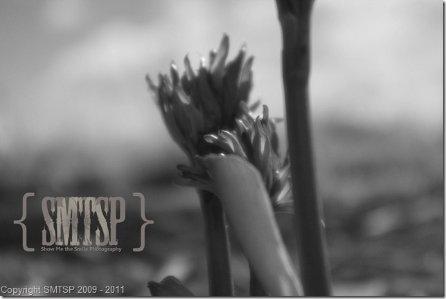 nature10