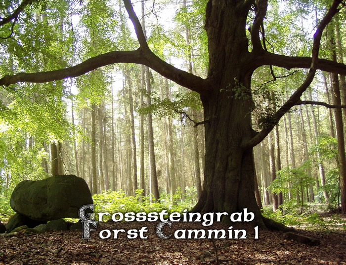 Grßsteingrab Forstg Cammin 1